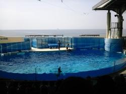 江の島水族館イルカ